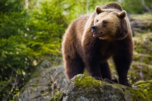 Add Protection Against a Bear Market With Collar Options