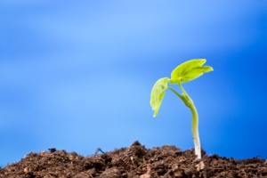 Choosing an Early Growth Stage Stock