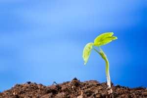 plant_grow_soil2.jpg